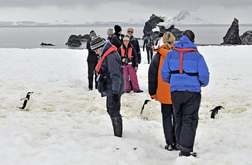 Tourists watching penguins pass between them.