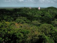 Parts of the Mayan City of Tikal can be seen poking out of the rainforest.