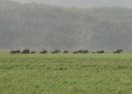 A herd of elephants in a national park in India.