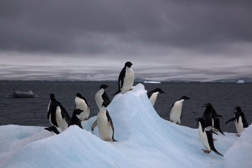 Adélie Penguins on an iceberg in Antarctica