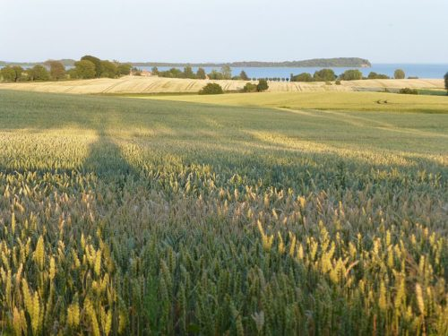 The Viking coins were found in a field on Rügen Island in Germany.