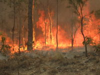 This bushfire, in Queensland, Australia spread over hundreds of acres in 2010.