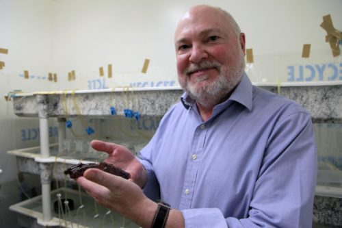 Professor David Glanzman holding a sea slug.
