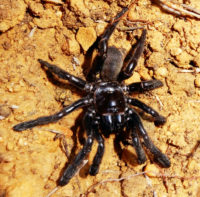 Number 16, a Giaus Villosus trapdoor spider, lived for 43 years.