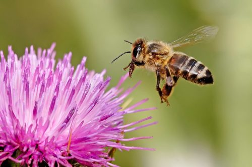 Honey bees have many skills even though their brains are small.