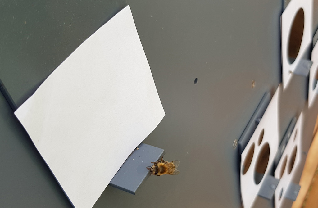 "Bees chose blank cards as ""smaller"" even though they had not seen them before."