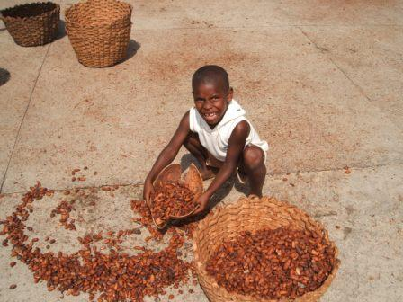 Boy collecting drying cacao in Venezuela.