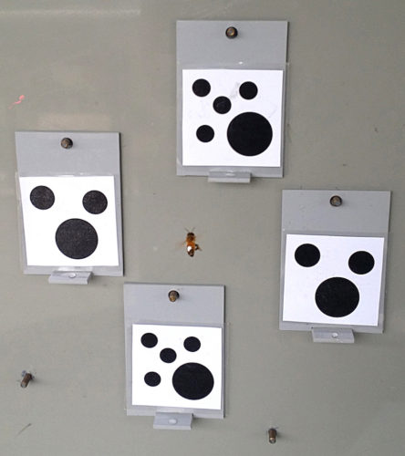 Bees were trained to choose cards with fewer shapes.