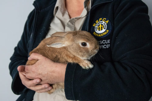 Bunny in the arms of a rescue worker.