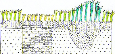 Things below ground can affect the way plants grow above ground.