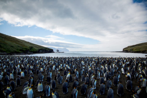 2017 picture of penguin colony on Possession Island.