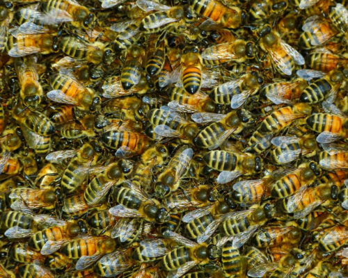 Swarming Bees