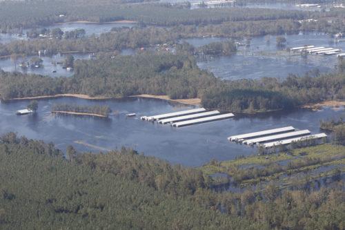 Wide shot of huge flooded pig farm in NC.