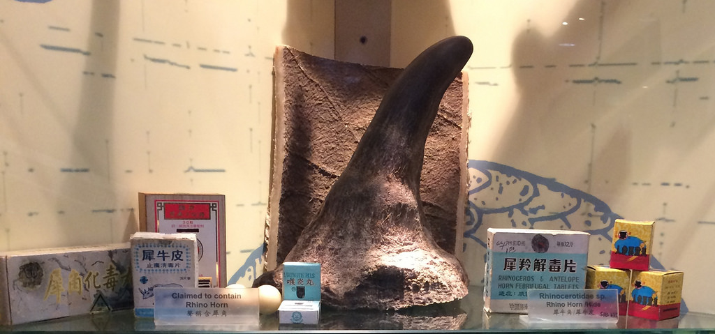 Examples of Rhino Horn Products Seized by the Hong Kong Government - Hong Kong's Agriculture, Fisheries and Conservation Department Visitor Center