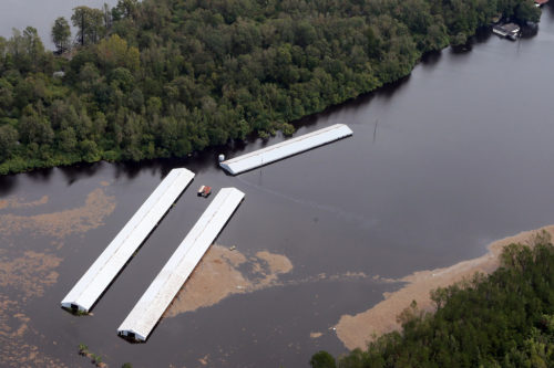 Flooded CAFO with lots of floating sludge