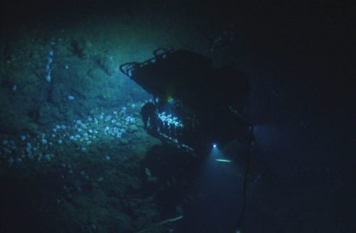 Image of a ROV shining a light on the octopuses.
