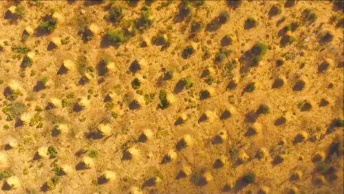 Drone view of the mounds in a tree-cleared area.