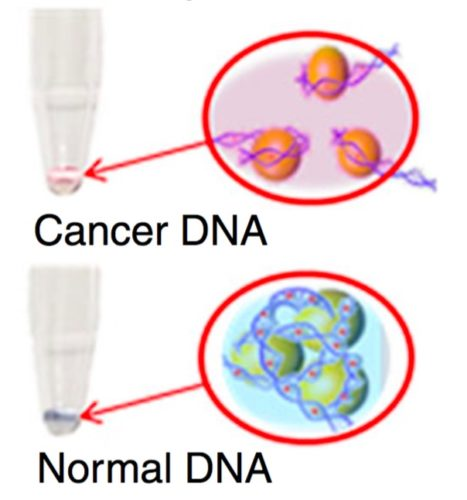Image showing Cancer DNA and Normal DNA binding to gold nanoparticles in different ways.