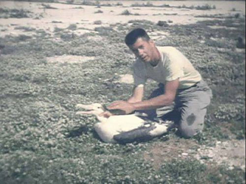 Chandler Robbins banding another albatross in 1966.