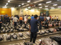 End of auction of fresh tuna at the Tsukiji fish market. Please notice the tails are cut off, to allow examination of the meat, and the inserted into the gills. Also, various labels applied to the fish.