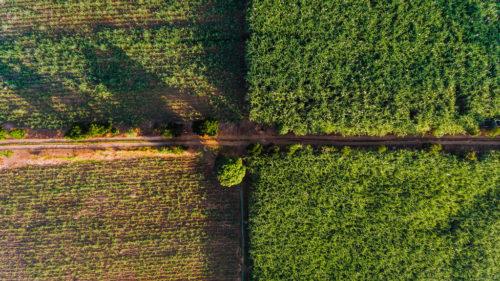 Drone view of a farm