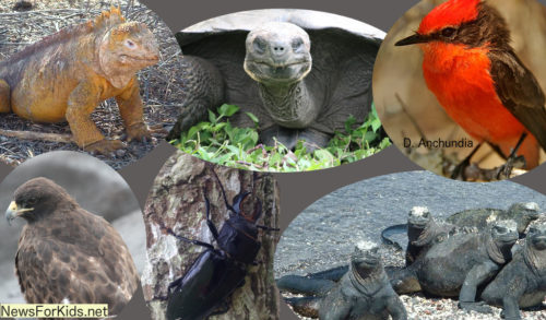 A collage of Galapagos animals.