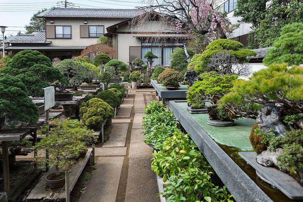 Bonsai Nursery Fuyo-en (jap. 芙蓉園)