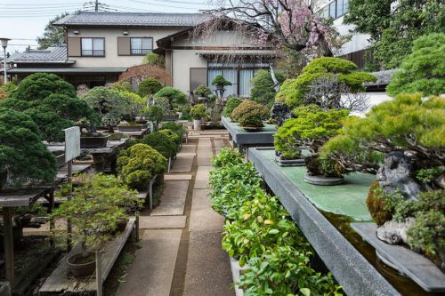 Bonsai Nursery Fuyo-en (jap. 芙蓉園)