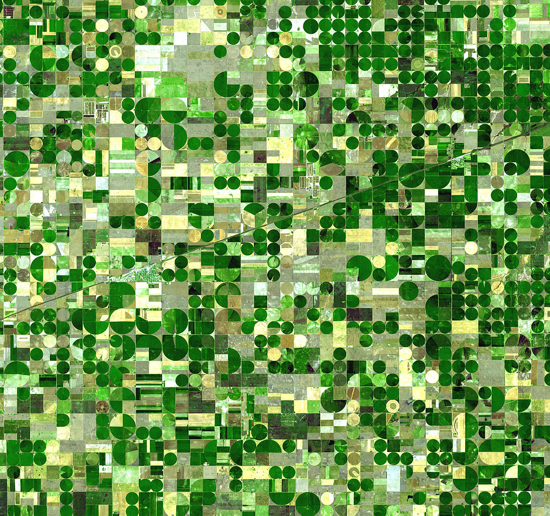 Satellite image of crops growing in Kansas, USA. Healthy, growing crops are green. Corn would be growing into leafy stalks by late June (when this photo was taken). Sorghum, which resembles corn, grows more slowly and would be much smaller and therefore, possibly paler. Wheat is a brilliant gold as harvest occurs in June. Fields of brown have been recently harvested and plowed under or lie fallow for the year. The circular crop fields are a characteristic of w:center point irrigation. The fields shown here are 800 and 1,600 meters (0.5 and 1 mile) in diameter. The image is centered near 37.4 degrees north latitude, 100.9 degrees west longitude, and covers an area of 37.2 x 38.8 km.