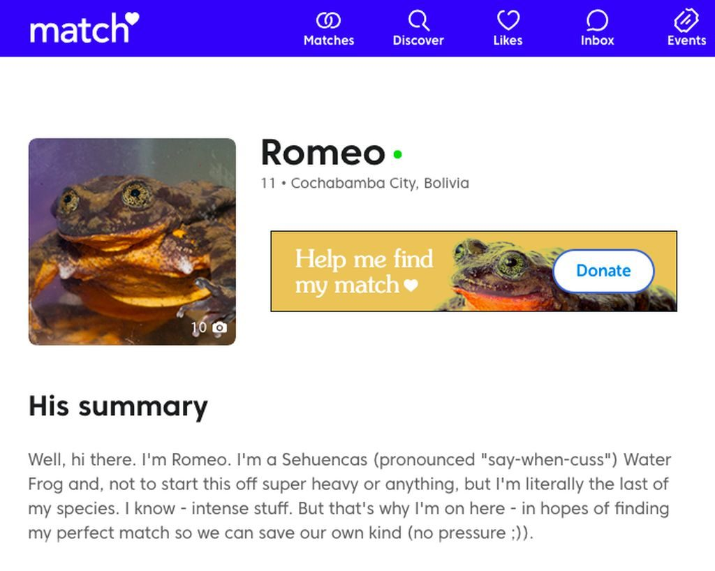 Screenshot of Romeo's match.com profile.