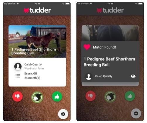 Screenshots of the bovine dating app Tudder.