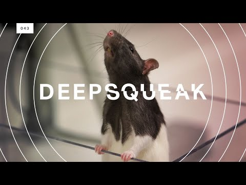 Mouse with sound waves drawn around it and the word DEEPSQUEAK superimposed.