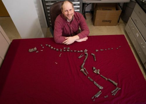 Sterling Nesbitt and fossil remains of Suskityrannus hazelae, which he found at age 16 in 1998.