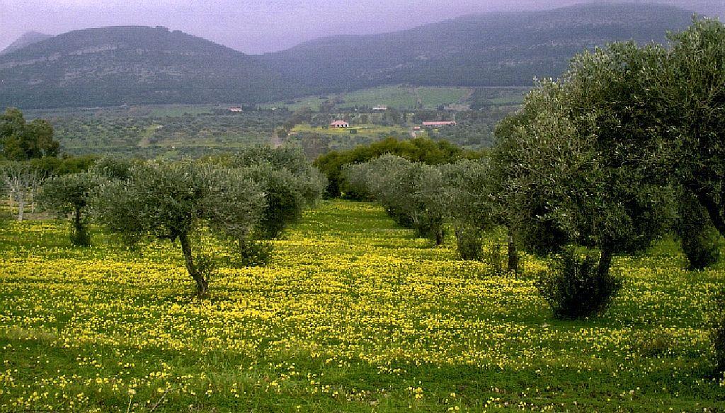 Sardinia Maristella Olive Grove