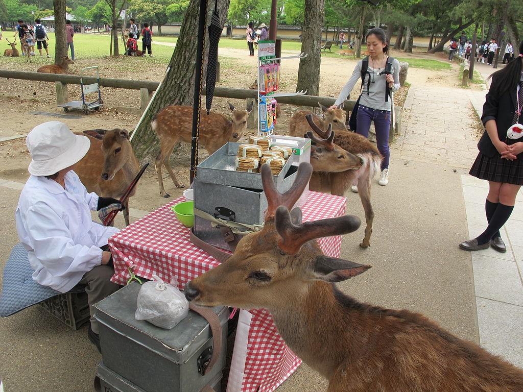 Nara, deers
