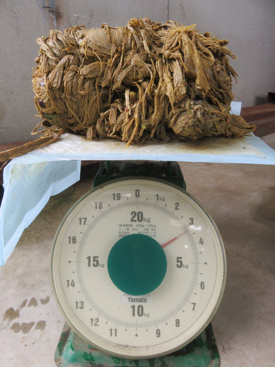 3.2 kilograms that came from a deer's stomach shown on a scale.