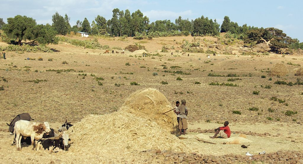 A Pause At Threshing Time, Axum, Ethiopia