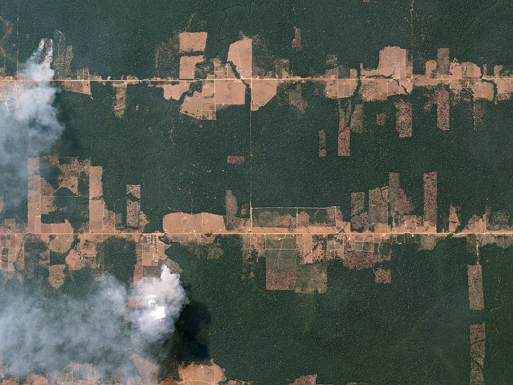 Fishbone Deforestation Rondônia, Brazil August 5, 2016 In the Amazon rainforest—just east of Porto Velho, Brazil—fires burn, clearing hectares of rainforest in preparation for farming and grazing.
