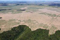 Ibama e Polícia Federal combatem grupo criminoso responsável por extrair e comercializar ilegalmente madeira da Reserva Biológica do Gurupi e das Terras Indígenas Caru e Alto Turiaçu, no Maranhão.