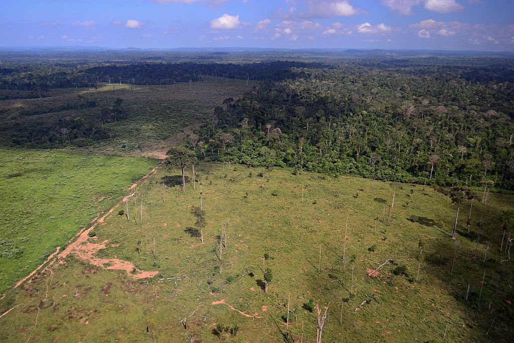 Aerial view of the boundary between the forest and pasturelands in Novo Progresso, Pará.