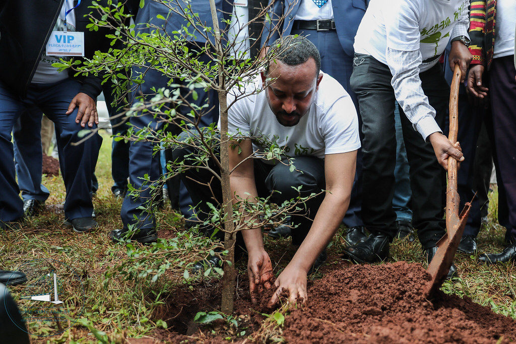 Prime Minister Abiy Ahmed plants a tree as part of the Green Legacy project.