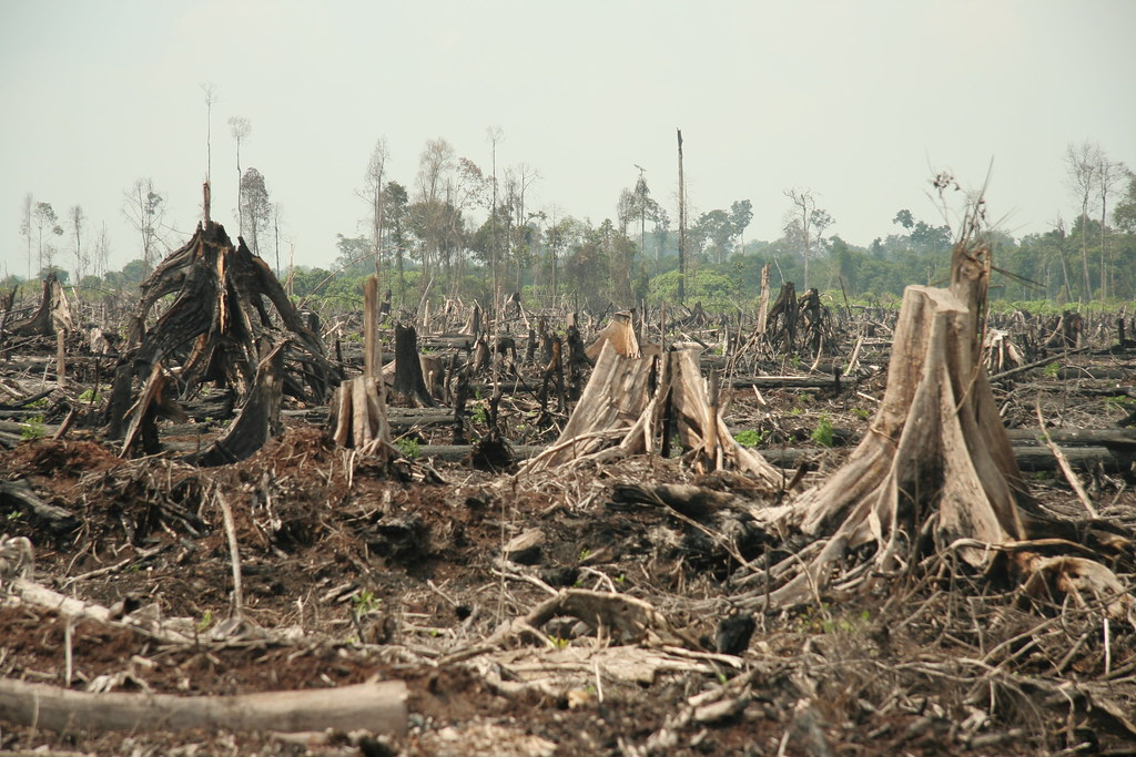 Forestry, sustainable or not, is a loser in land use decisions in the tropics. All that you see here in this picture will be a massive oil palm plantation within a year or two.