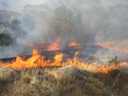 Bush Fire Getting Too Close