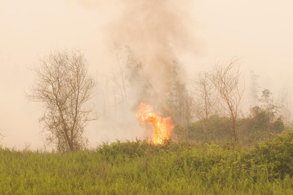Flames are visible as peat lands burn in Tumbang Nusa, outside Palangka Raya, Central Kalimantan.