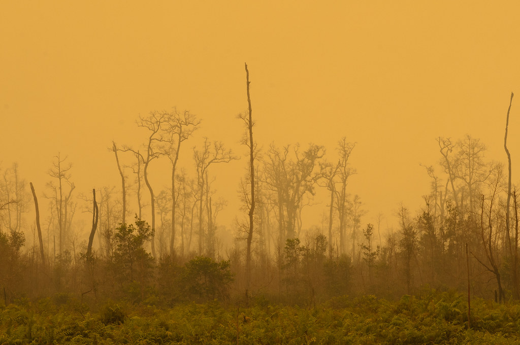 The sky becomes a yellowish hue due to the thick smoke of peat land fires. Palangka Raya, Central Kalimantan.