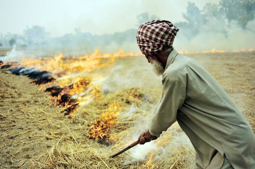Burning of rice residues after harvest, to quickly prepare the land for wheat planting, around Sangrur, SE Punjab, India.