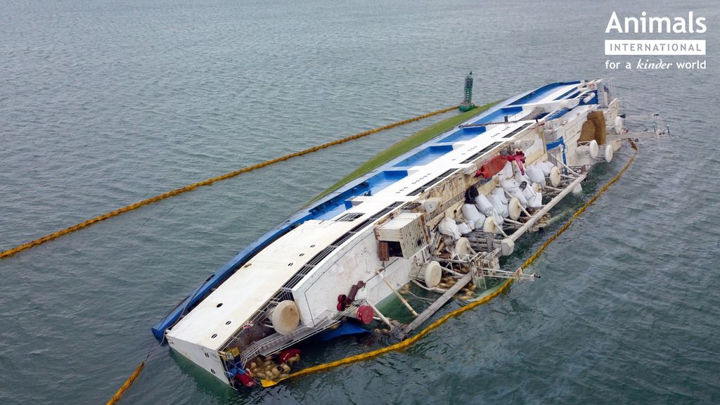 The Queen Hind, which was carrying 14,600 sheep, is show flipped on its side in the water.