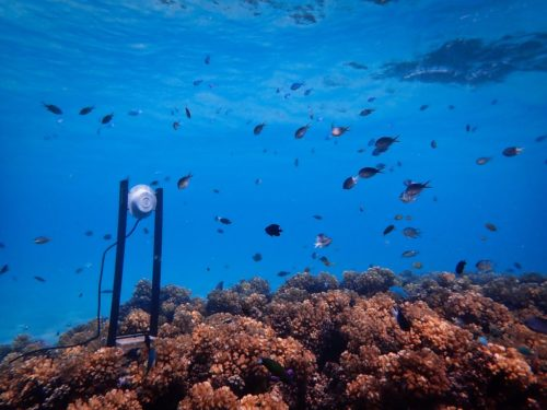 Loudspeaker on a coral reef.
