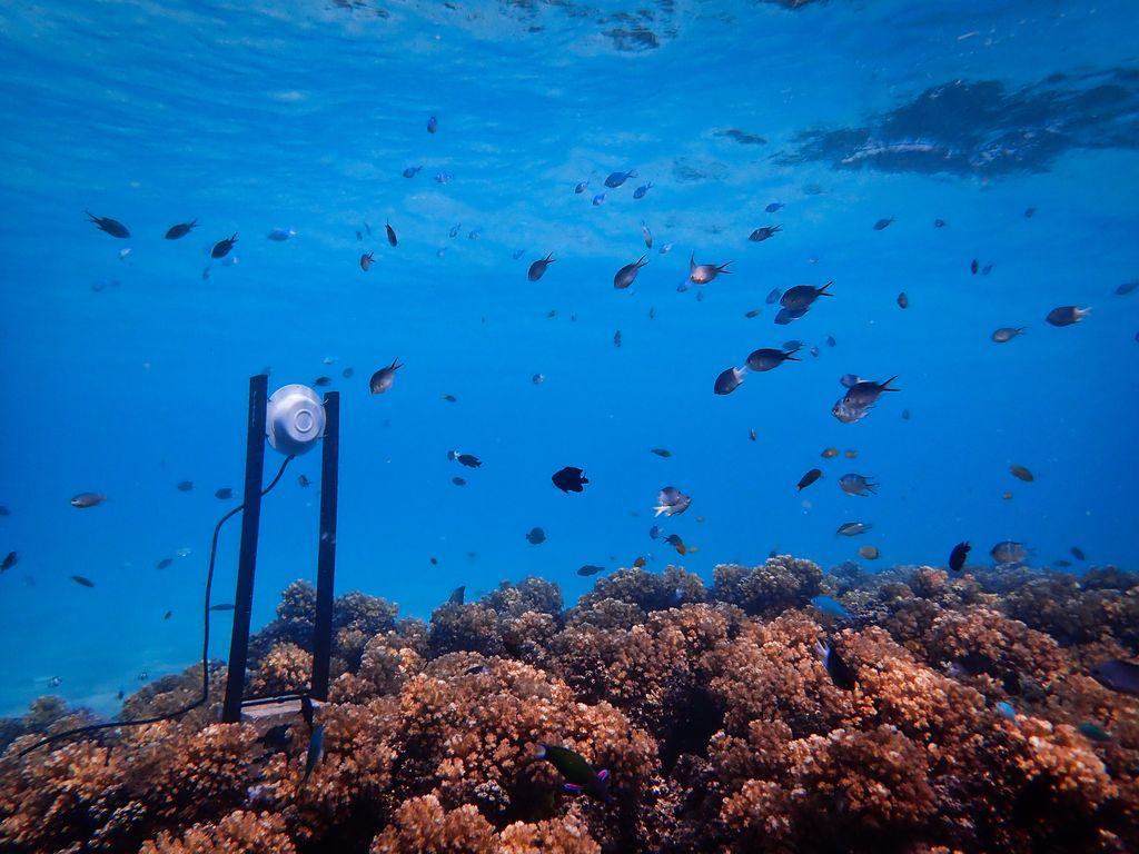 Loudspeaker on a coral reef.