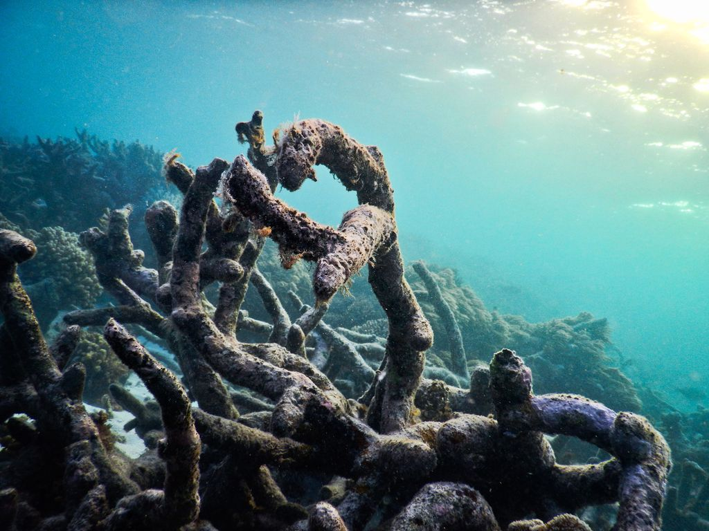 Dead coral rubble on the recently-damaged Great Barrier Reef.